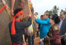 elephant-festival-2013