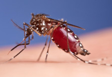 Nationwide Dengue Fever Warning for Laos