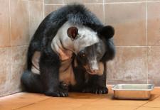 neurosurgery-for-bears_66160_600x450