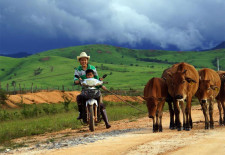 Lao beef prices remain at all-time high