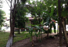 (735) Beautiful House and Garden For Rent (Vientiane, Laos)